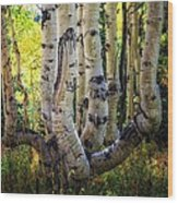 The Multiple Trunk Aspen Tree Wood Print