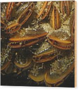 The Mussel Group Wood Print