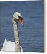 The Mute Swan Wood Print