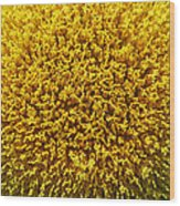 The Nature Of A Sunflower Wood Print