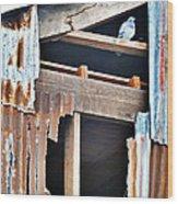 The Nervous Pigeon  Wood Print