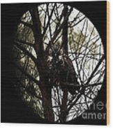 The Night Owl And Harvest Moon 2 Wood Print