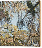 The Oaks Of City Park Wood Print