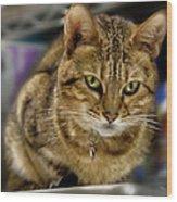 The Obligatory Cute Cat Photo Wood Print