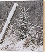 The Old Fence - Snowy Evergreen Wood Print