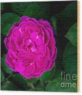 The Old Red Rose Wood Print