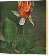 The Orange Rose Wood Print