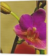 The Original Orchid Wood Print