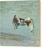 The Osprey Glare Wood Print