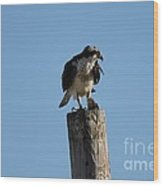 The Osprey's First Catch Collection Image IV Wood Print