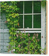 The Other Window Wood Print by Lisa  DiFruscio