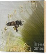 The Overloaded Bee Wood Print