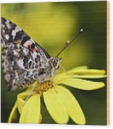 The Painted Lady And The Daisy  Wood Print