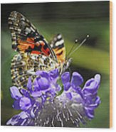 The Painted Lady Butterfly  Wood Print