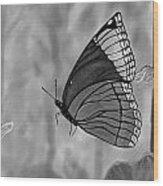 The Papillion Wood Print