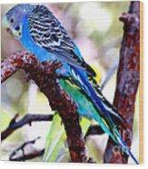 The Parakeet Wood Print