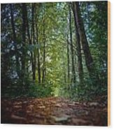 The Pathway In The Forest Wood Print