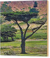 The Peace Tree Wood Print