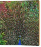 The Peacock Wood Print