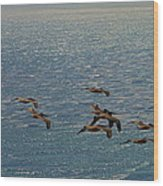 The Pelicans Hunting Wood Print