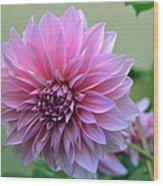 The Pink Dahlia-flower2 Wood Print