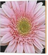 The Pink Flower Wood Print