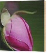 The Pink Rose Bud Wood Print