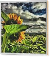 The Poppies Are Almost Gone. Please Wood Print