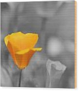 The Poppy Stands Alone Wood Print