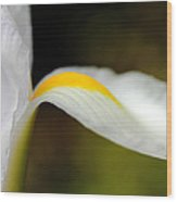 The Pose White Dutch Iris Flower  Wood Print