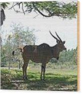 The Postcard Wood Print