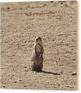 The Prairie Dog Wood Print