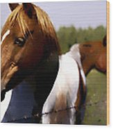 The Prairie Horses Wood Print