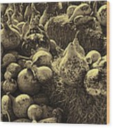 The Produce Of The Earth In Sepia Wood Print