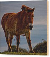 The Przewalski Horse Equus Przewalskii Wood Print