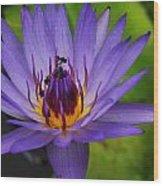 The Purple Lotus. Wood Print