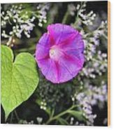 The Queen's Morning Glory Wood Print
