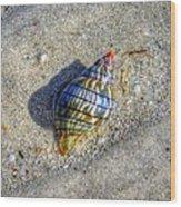 The Rainbow Shell Wood Print