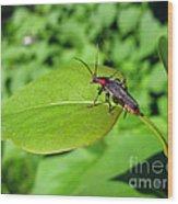 The Rednecked Bug On The Leaf Wood Print