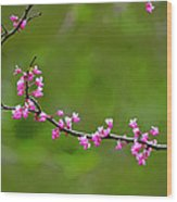 The Rite Of Spring Wood Print by Fraida Gutovich