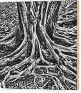 The Root Wood Print
