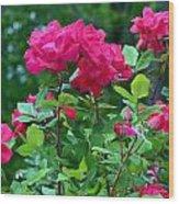 The Rose Garden Wood Print