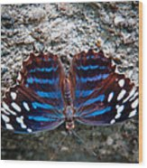 The Royal Blue Butterfly Wood Print