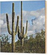 The Saguaros  Wood Print