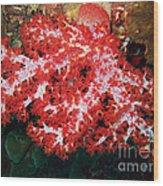 The Scarlet Soft Coral. Similan Islands Wood Print