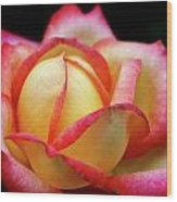 The Scent Of A Rose Wood Print