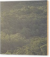 The Schlerophyll Forest Canopy Wood Print