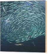 The School Fish Wood Print by Saifon Anaya