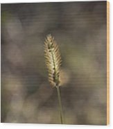 The Seeds Of Nature Wood Print