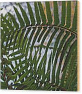 The Shade Of A Fern Wood Print